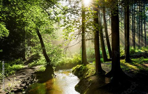 piekny-wschod-slonca-w-mglistym-lesie