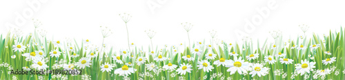 Fotografering Vector  blossoming daisy  flowers  field, nature border isolated.