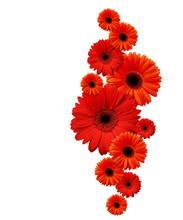 Red Gerbera Flowers In A Verti...