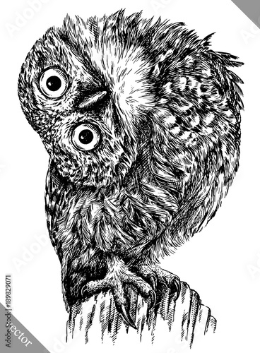 Canvas Prints Owls cartoon black and white engrave isolated owl vector illustration