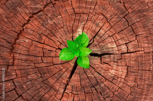 Obraz plant growing out of a tree stump - fototapety do salonu