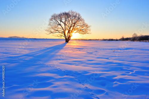 楡の木の夜明け 北海道 Canvas-taulu