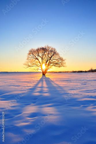 Foto 楡の木の夜明け 北海道