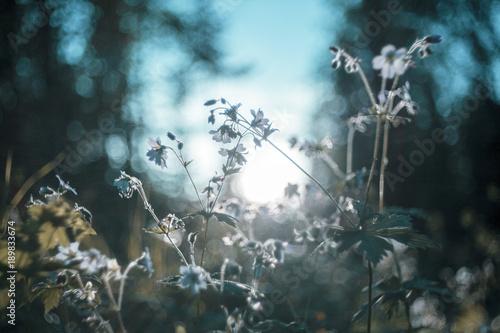 krajobraz-uralu-krajobraz-rosji-rzadkie-piekne-kwiaty