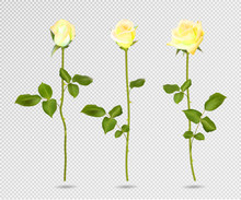 Vector Set Of Yellow Rose Flow...