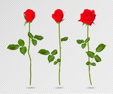 Vector set of red rose flower. 3d roses isolated on transparent, vector illustration. Realistic flowers vector collection