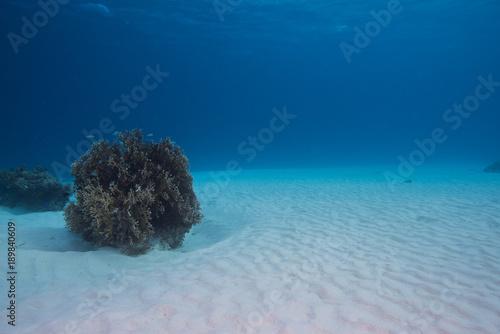 砂地の海底とサンゴ