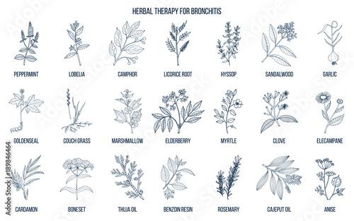 Fotografie, Obraz  Herbal therapy for bronchitis