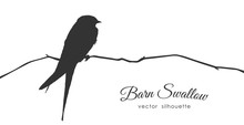 Silhouette Of Barn Swallow Sit...