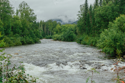 Foto op Aluminium Rivier Mountain river with green plants on the shore