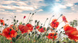 Leinwanddruck Bild - Summer happiness: meadow with red poppies :)