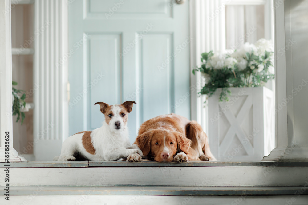 Two dogs on the porch