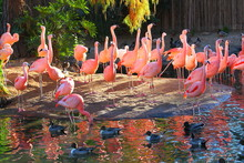 Flamingos On A Sand Bar In A P...