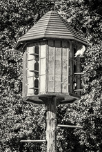 Wooden Dovecote With Pigeons In Forest, Colorless