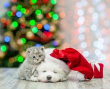 Baby Kitten And Samoyed Puppy ...