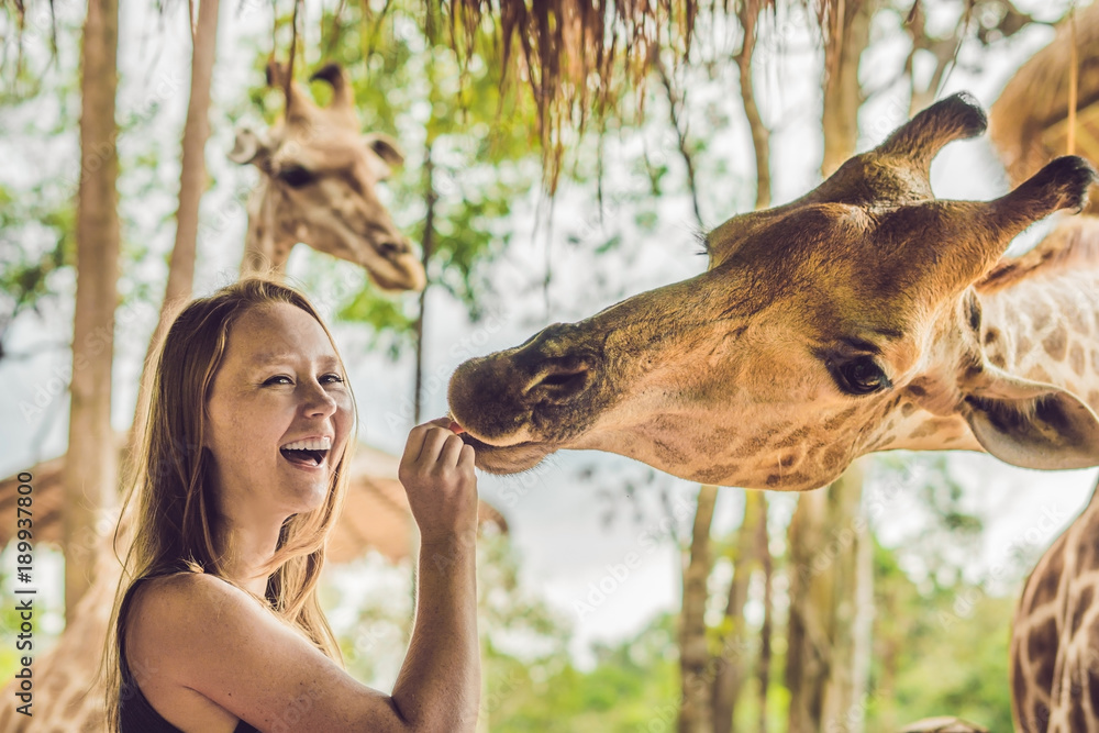 Fototapeta Happy young woman watching and feeding giraffe in zoo. Happy young woman having fun with animals safari park on warm summer day
