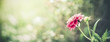canvas print picture Summer nature background with pink flower at bokeh . Flowers garden template or banner