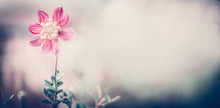 Pastel Nature With Pink Flower...