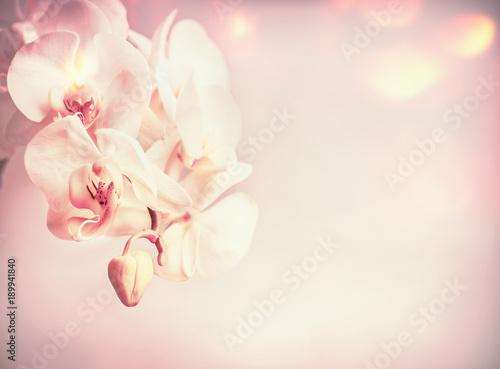 Fototapety styl prowansalski kwiatuszki-na-stonowanym-tle