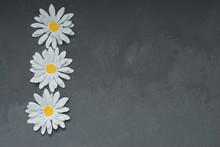 Three Papper Fake Artificial Chamomiles On Gray Cement Background With Copy Paste. Spring Flowers.
