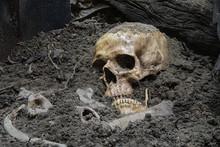 Skulls And Skeletons Bones Wer...