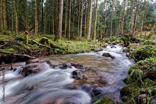 Foto op Aluminium Lavendel Ruisseau et cascades des Vosges