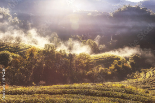 wschod-slonca-przy-herbacianej-plantaci-polem-z-mgla-przy-doi-angkang-chiang-mai-tajlandia