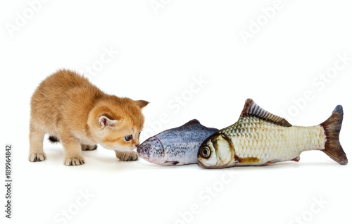 Spoed Foto op Canvas Tijger Little kitty and big fish
