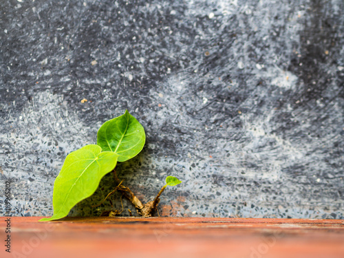 Photo  Little sprout fight to grow under rough cement environment.