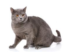 Animal, Cat, Pet Concept - Cha...