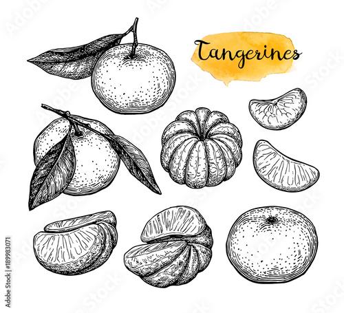 Ink sketch of tangerines.