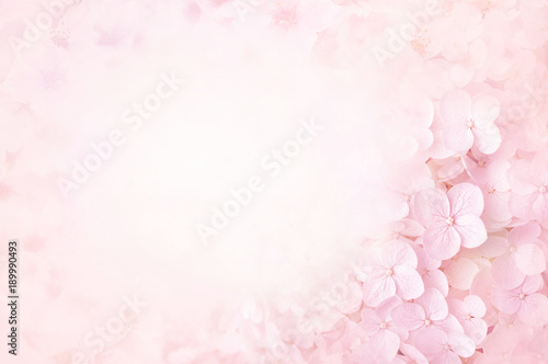 Summer blossoming hydrangea, flower bokeh background, pastel and soft floral card