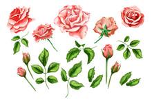 Vector Realistic Rose Flower Leaves Stem Set