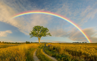 rural landscape ,rainbow,road and tree