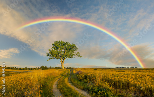 Photo sur Toile Beige rural landscape ,rainbow,road and tree