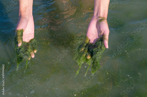 Photo Green algae on the hands, muddy water, sea pollution.