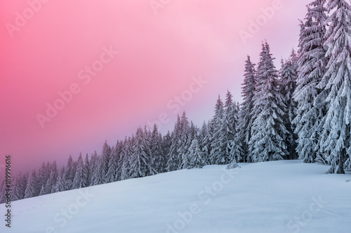 Papiers peints Rose clair / pale Winter forest in Beskidy mountains, Poland