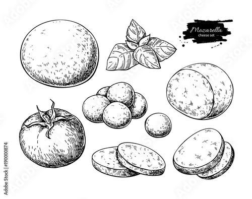 Fototapeta Mozzarella cheese vector drawing. Hand drawn round piece with baby mozzarella obraz