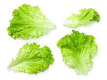 Lettuce Salad Leaves Isolated ...