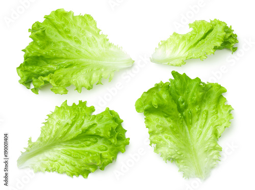Fotografía  Lettuce Salad Leaves Isolated on White Background