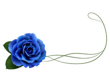 Realistic Blue Rose, Border.