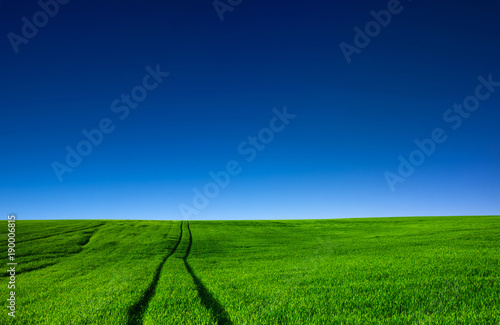 Deurstickers Groene field of grass
