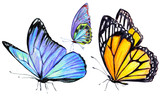 Fototapeta Motyle - beautiful butterflies, hand drawn, isolated on a white