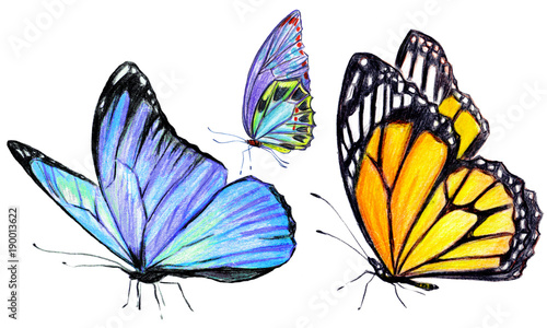 beautiful butterflies, hand drawn, isolated on a white