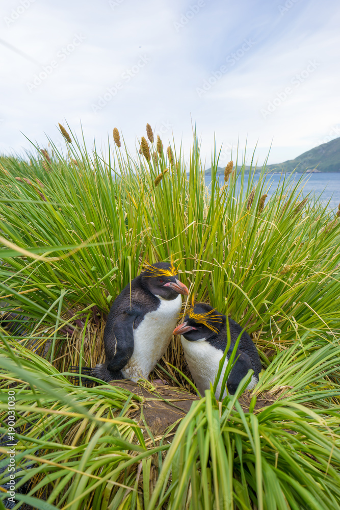 penguins in antarctic