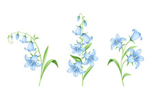 Set Of Vector Blue Bluebell Fl...