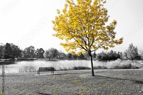 yellow-tree-over-park-bench