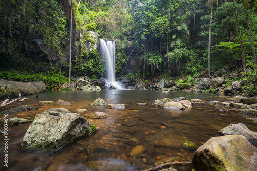 Fototapeta Curtis Falls is a popular tourist destination on Mount Tamborine in the Gold Coast hinterland, Queensland, Australia