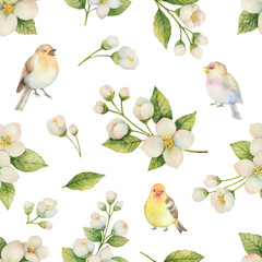 Fototapeta Do sypialni Watercolor vector seamless pattern with bird and flowers Jasmine isolated on a white background.