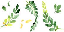 Autumn Leaf Of Acacia In A Han...